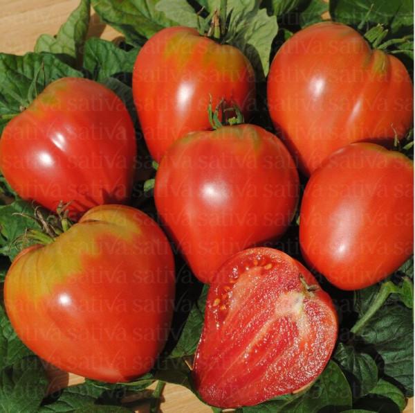 Bio Saatgut - Ochsenherz Fleischtomate